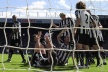Newcastle lost three months goalkeeper