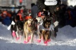 PHOTOS: In Alaska, began the longest race, dog harness